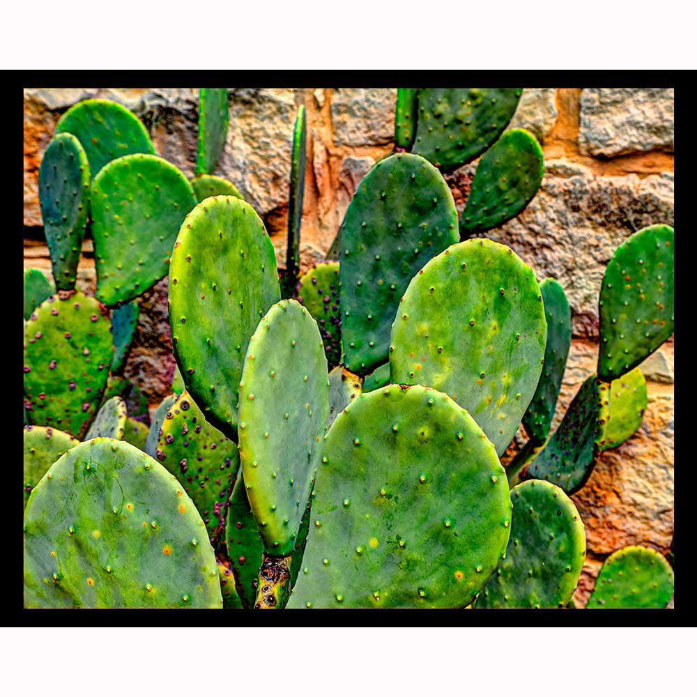 Prickly Pear Cactus Night Light Designs